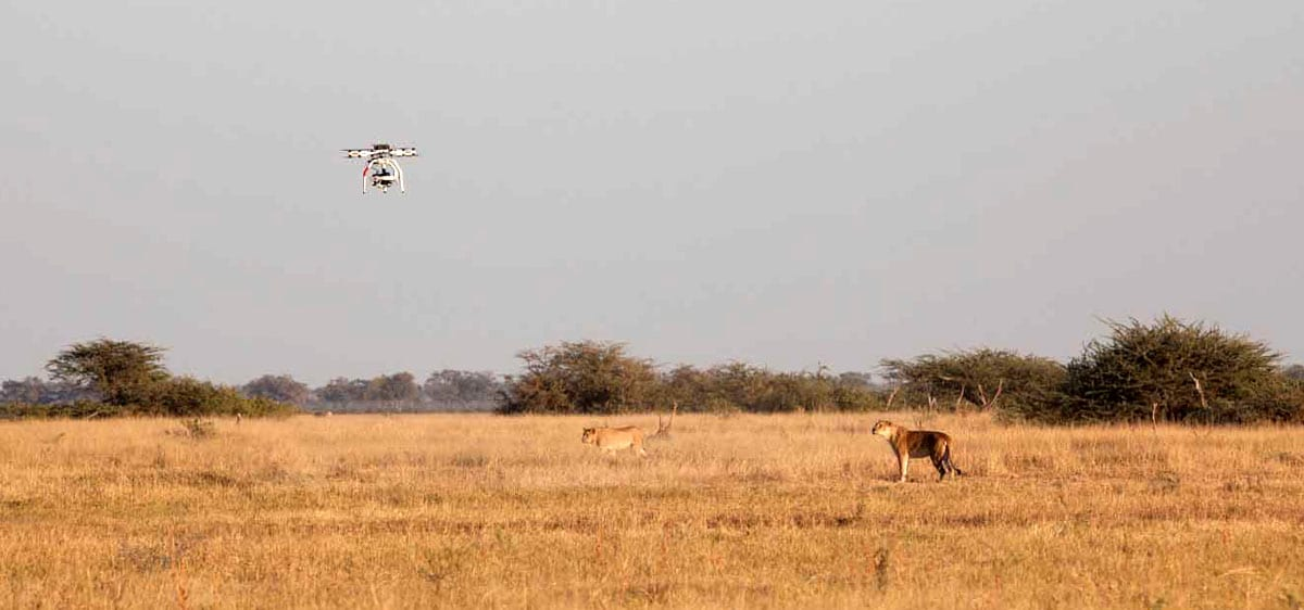 Aerigon drone in BBC Natural World's Return of the Giant Killers